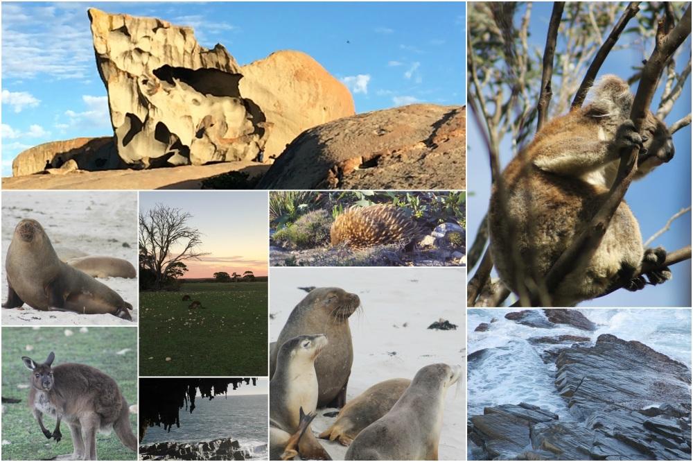 BeFunky Collage Kangaroo Island animaux 2